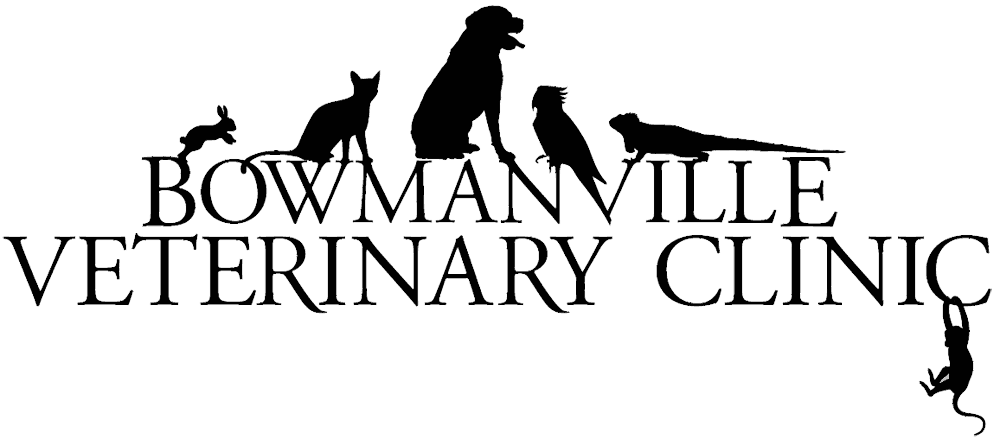 Bowmanville Veterinary Clinic